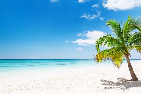 Coconut Palm trees on white sandy beach in Punta Cana, Dominican Republic Foto de archivo