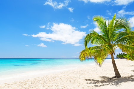 thailand beach: Coconut Palm trees on white sandy beach in Saona island, Dominican Republic Stock Photo