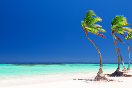 caribbean beach: Coconut Palm trees on white sandy beach in Punta Cana, Dominican Republic Stock Photo