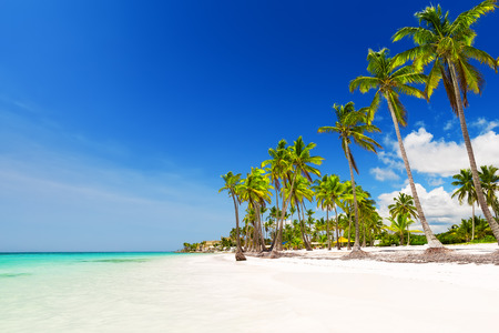 Coconut Palm trees on white sandy beach in Punta Cana, Dominican Republic 스톡 콘텐츠