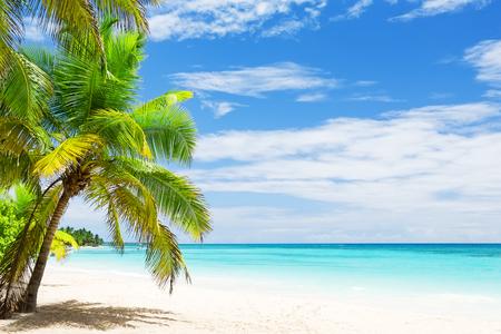 modrý: Kokosové palmy na bílé písečné pláži v Punta Cana, Dominikánská republika