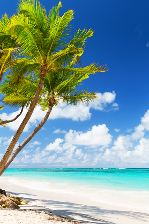 Kokosnuss-Palmen am weißen Sandstrand in Punta Cana, Dominikanische Republik
