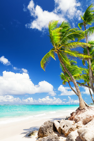 Coconut Palm trees on white sandy beach in Punta Cana, Dominican Republic Stockfoto