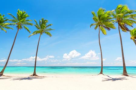 Kokosnuss-Palmen am weißen Sandstrand in Punta Cana, Dominikanische Republik Standard-Bild - 61944801
