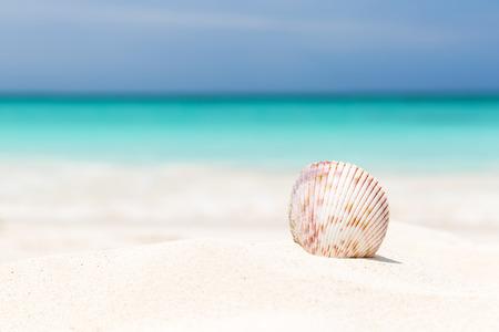 하얀 모래 해변에 바다 셸 스톡 콘텐츠 - 61947632