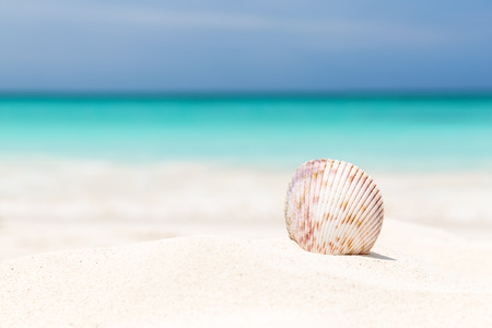 Sea shell on the white sandy beach