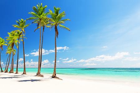 푼타 카나, 도미니카 공화국에서 하얀 모래 해변에서 코코넛 팜 나무 스톡 콘텐츠 - 67194439
