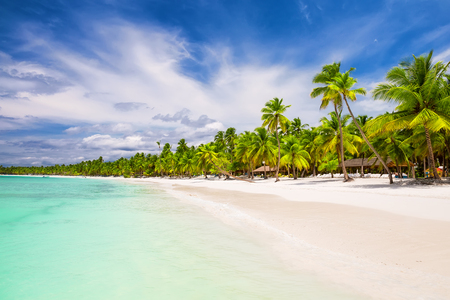 Coconut Palm trees on white sandy beach in Punta Cana, Dominican Republic Stok Fotoğraf