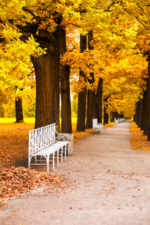 White park bench in the park in fall time Stock Photo