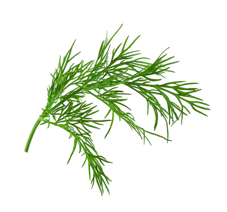 fresh dill on white background Banque d'images