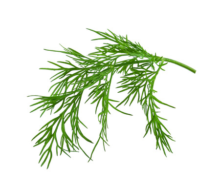 fresh dill on white background 写真素材