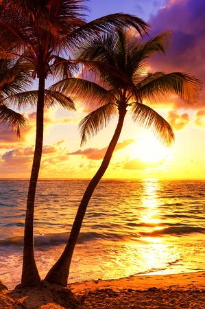 カラフルな夕日とヤシの木