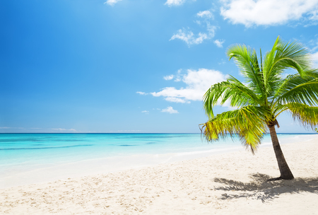 Beautiful tropical white beach and coconut palm trees. Holiday and vacation concept. Stock Photo