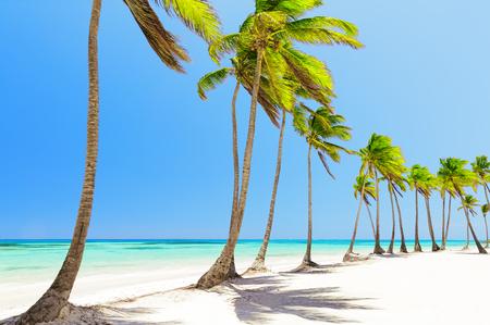 모자 Cana, 도미니카 공화국에있는 하얀 모래 해변에 코코넛 야자수
