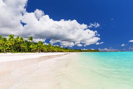 Coconut Palm trees on white sandy beach in Caribbean sea, Saona island. Dominican Republic Imagens