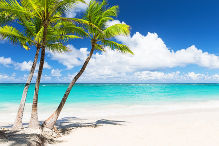 cana: Beautiful tropical white beach and coconut palm trees. Holiday and vacation concept.