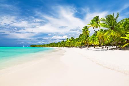 Coconut Palm trees on white sandy beach in Caribbean sea, Saona island. Dominican Republic