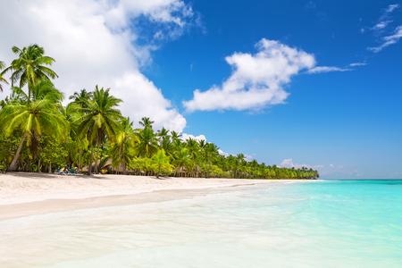 cana: Coconut Palm trees on white sandy beach in Saona island, Dominican Republic Stock Photo