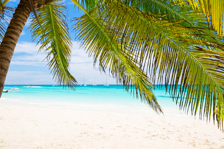 Coconut Palm trees on white sandy beach in Punta Cana, Dominican Republic. Vacation holidays background wallpaper. View of nice tropical beach.