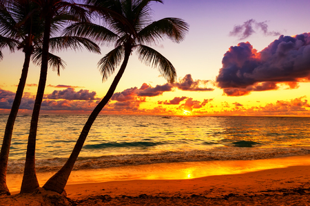 Coconut palm trees against colorful sunset in Punta Cana, Dominican Republic
