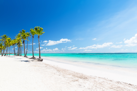 Coconut Palm trees on white sandy beach in Punta Cana, Dominican Republic. Summer holiday concept. Tropical beach background. Stock fotó