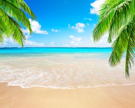Cocoteros contra el cielo azul y la hermosa playa de Punta Cana, República Dominicana. Fondo de pantalla de vacaciones vacaciones. Vista de una bonita playa tropical.