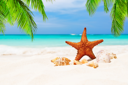 Starfish and leaves of coconut palm tree on the white sandy beach in Punta Cana, Dominican Republic. Summer holiday concept.