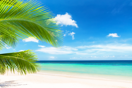 Coconut palm tree against blue sky and beautiful beach in Punta Cana, Dominican Republic. Vacation holidays background wallpaper. View of nice tropical beach.