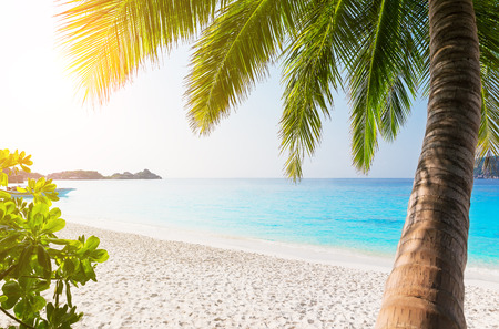 Coconut palm trees against blue sky and beautiful beach in Similan island, Thailand. Vacation holidays background wallpaper. View of nice tropical beach. Stock Photo