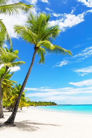 Coconut Palm trees on white sandy beach in Caribbean sea, Saona island. Dominican Republic. Фото со стока