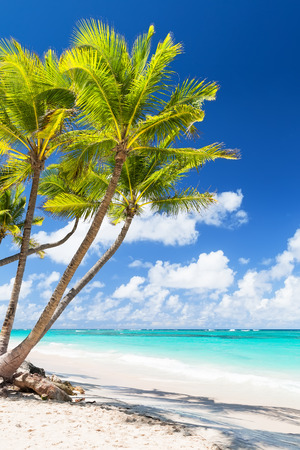 Coconut Palm trees on white sandy beach in Punta Cana, Dominican Republic. Summer holiday concept. Tropical beach background.