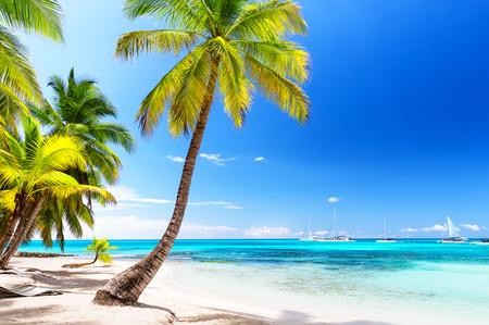 Coconut Palm trees on white sandy beach in Caribbean sea, Saona island. Dominican Republic.