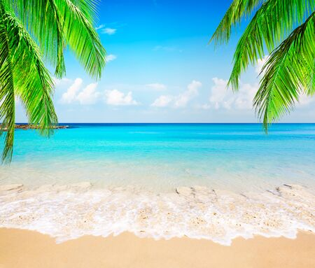 Coconut palm trees against blue sky and beautiful beach in Punta Cana, Dominican Republic. Vacation holidays background wallpaper. View of nice tropical beach.