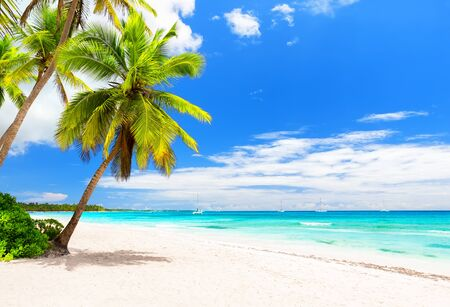 Coconut Palm trees on white sandy beach in Caribbean sea, Saona island. Dominican Republic. Beach summer concept.