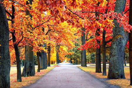 Autumn landscape, beautiful city park with fallen yellow leaves. Autumn scenery with footpath in colorful forest.