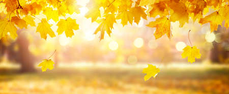 Panorama of autumn landscape, beautiful city park with fallen yellow leaves. Autumn scenery with blurred background.