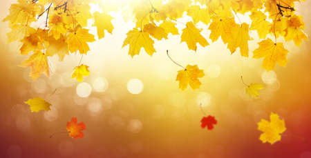 Panorama of autumn landscape, beautiful city park with fallen yellow leaves. Autumn golden abstract background with bokeh light and colorful fall leaves.