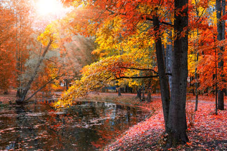 Autumn landscape, beautiful city park with fallen yellow leaves. Autumn scenery with lake in colorful forest.