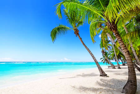 Coconut Palm trees on white sandy beach in Caribbean sea, Saona island in Dominican Republic .. Vacation holidays background wallpaper. View of nice tropical beach. 스톡 콘텐츠