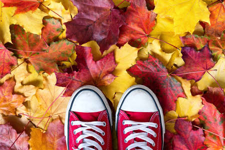 Red sneakers on a yellow autumnal leaves background. Autumn season in red hipster shoes, copy space.