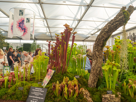 keywords: LONDON, UK - MAY 25, 2017: RHS Chelsea Flower Show 2017. Visitors observing the Hampshire Carnivorous Plants display in the Great Pavilion.