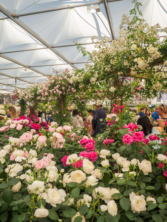 other keywords: LONDON, UK - MAY 25, 2017: RHS Chelsea Flower Show 2017. Visitors observing variegated roses display.