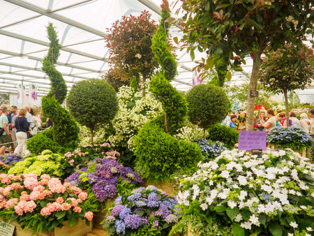 LONDON, UK - MAY 25, 2017: RHS Chelsea Flower Show 2017. Visitors observing mixed plants displays.