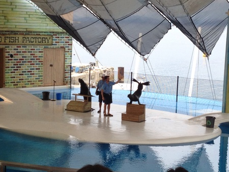 freeport: Sealion show at ocean adventure subic freeport zone philippines
