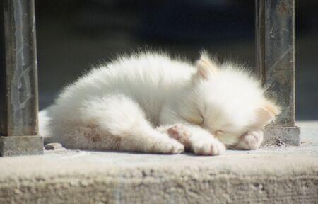 A newborn kitten taking a nap in the sunlight. Stock Photo