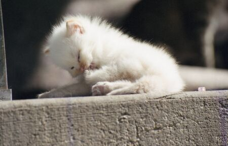 Fluffy kitten gently cleaning its paw in the sugnlight. Stock Photo