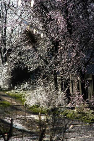 An unusual ice storm hits Kansas during the spring, covering emerging plant life with a sheet of ice.