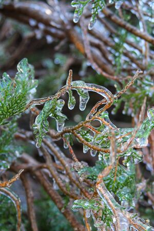 An unusual ice storm hits Kansas during the spring, covering emerging plant life with a sheet of ice. Stock Photo - 126035427