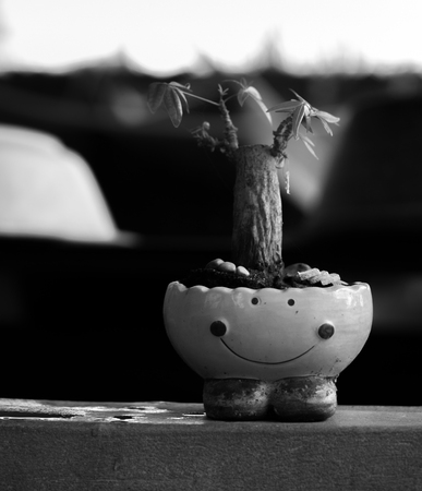 SMALL TREE GROWN IN SMILEY-POT