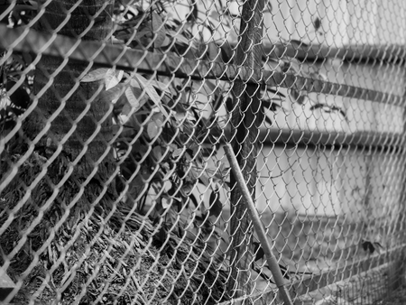 referidos: BLACK AND WHITE PHOTO OF CHAIN-LINK FENCE (ALSO REFERRED TO AS WIRE NETTING, WIRE-MESH FENCE, CHAIN-WIRE FENCE, CYCLONE FENCE, HURRICANE FENCE, OR DIAMOND-MESH FENCE)